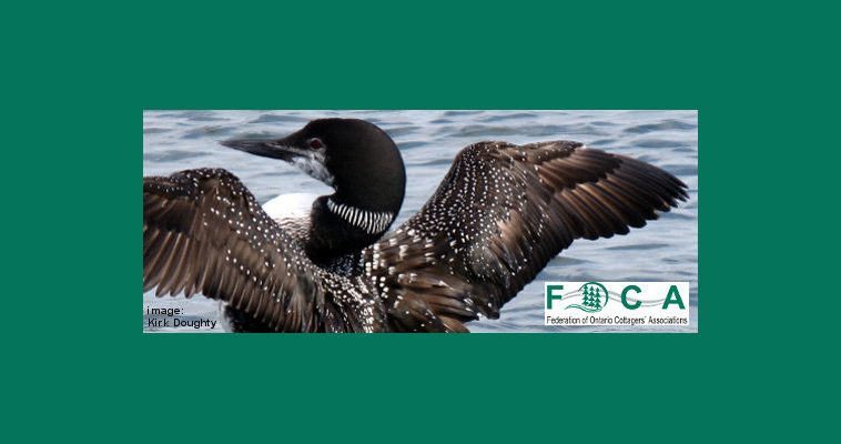 Loon green background