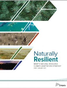 Naturally Resilient cover